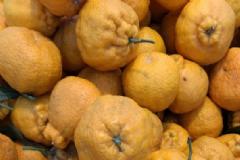 四川哪里的丑橘最甜?丑橘是什么产地?[图]