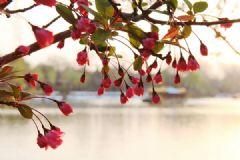春季去哪里旅游比较好?春季旅游胜地有哪些?[多图]