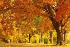为什么秋天会不开心?为什么秋天会感到凄凉?[多图]
