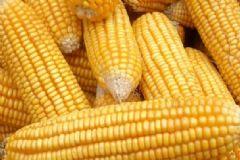 小孩吃玉米有什么好处?儿童吃玉米的好处有哪些?[图]