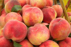 桃子为什么不能多吃?桃子吃多了会怎么样?[多图]