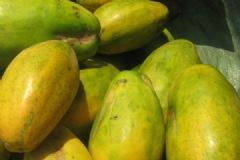 木瓜属于热带水果吗?木瓜是不是热带水果?[多图]