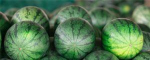 西瓜减肥吗,如何挑选西瓜