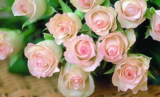 玫瑰花如何保存才能持久不枯 延长玫瑰花保鲜期的小妙招