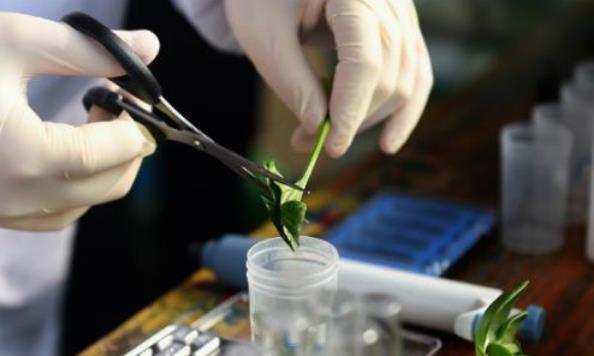 洗蔬菜水果时如何去掉农药残留 不同蔬果的农药分析