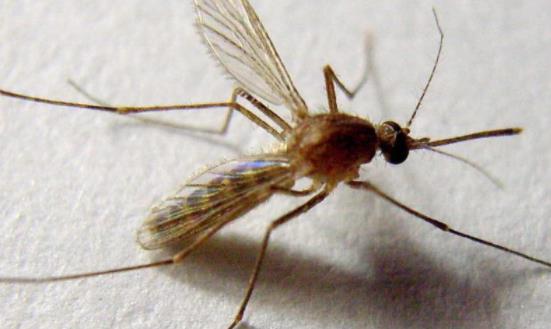 什么人容易招蚊子?血糖高招蚊子咬吗?