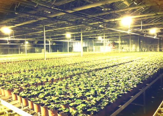 植物补光灯能完全代替阳光光照吗?植物补光灯怎么选?