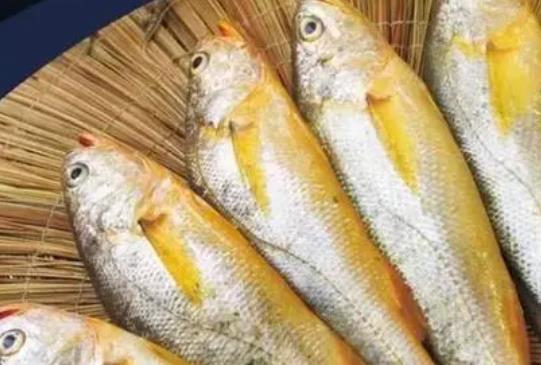 黄花鱼不宜与哪些食物同食?痛风病人可以吃黄花鱼吗