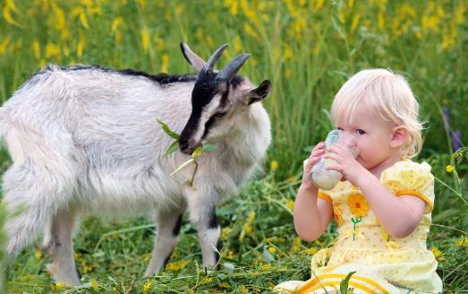 喝羊奶有什么好处?羊奶可以护肤吗?