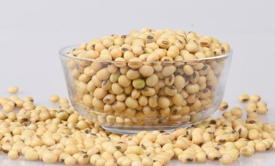 吃黄豆有什么好处?吃黄豆的注意事项有哪些?