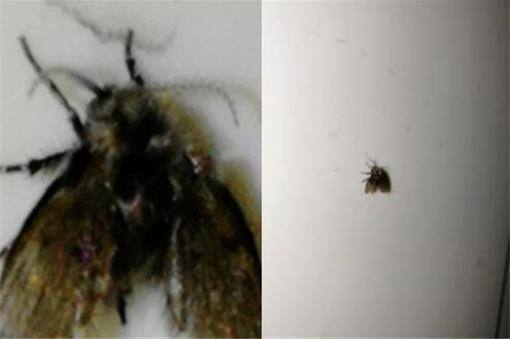 厕所里面黑色的小飞虫是怎么来的 彻底清除杀灭小飞虫妙招